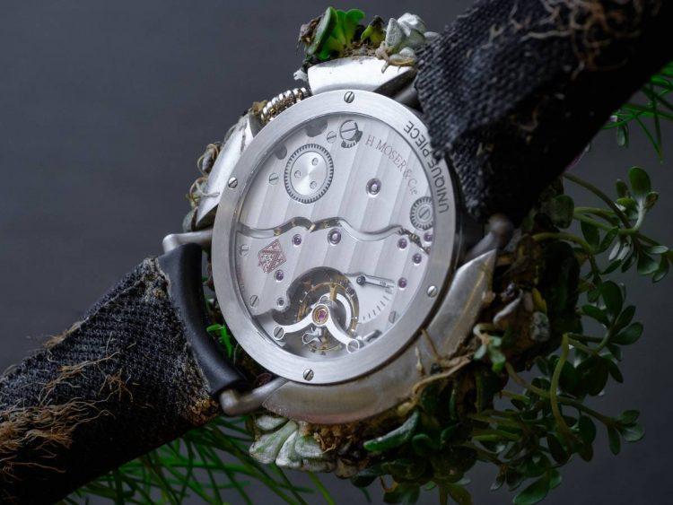 Moser Nature Watch